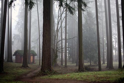 nature oregon portland foggy pacificnorthwest canon5d pierpark canon5dii