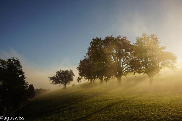 Sunrise in the mist  (on explore October 26, 2016)