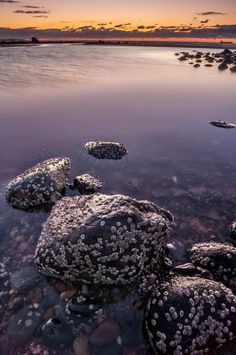 reflection beach clouds sunrise lowtide irvingnaturepark saintjoh