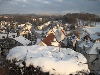 Storchennest Bad Waldsee 25.1.2015 16Uhr30