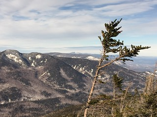 7Windswept tree on summit | by ADK Mohican Club Photos
