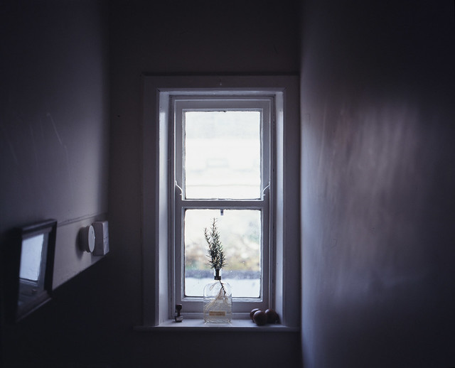 Rosemary and backyard window