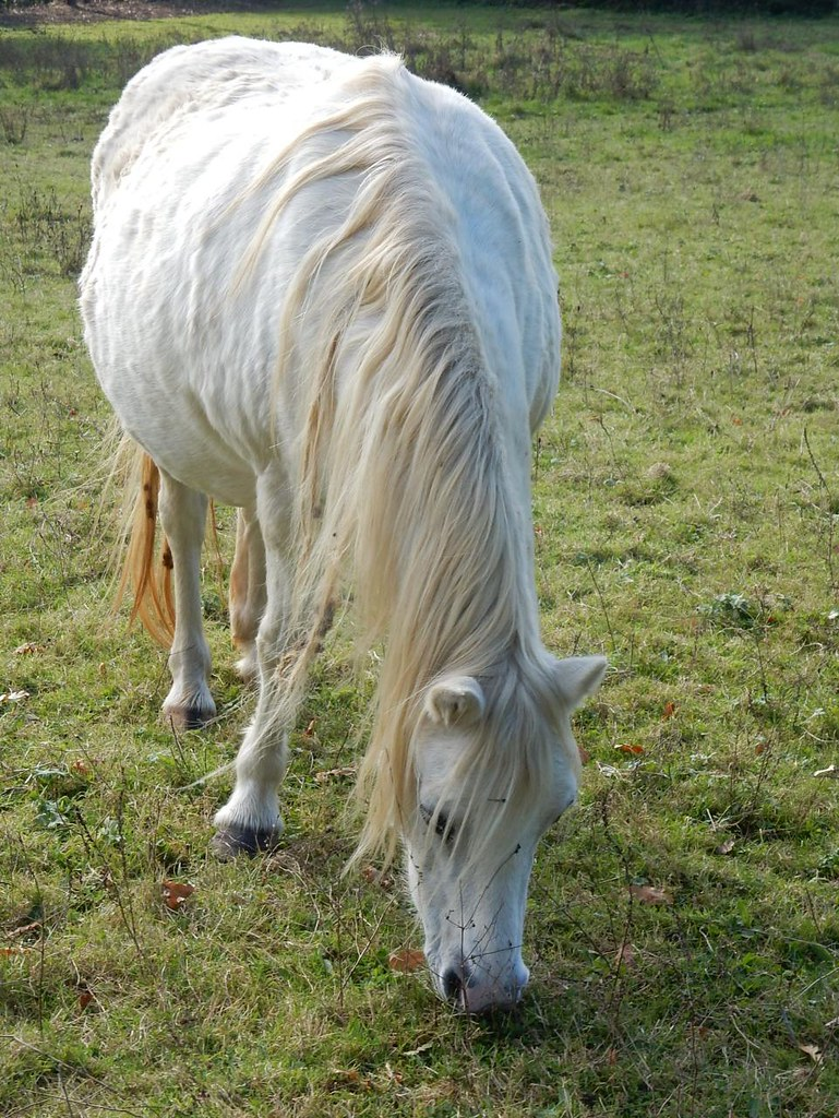 White horse Witley to Haslemere