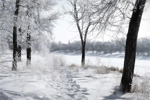 winter snow canada lumix winnipeg hoarfrost manitoba explore redriver 1000views cans2s fz35 churchilldriveparkway