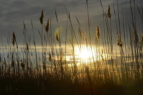 winter sunset beach january longisland jonesbeach seagrass 2015 nassaucounty wantagh westend2 beacheslandscapes nikond5100