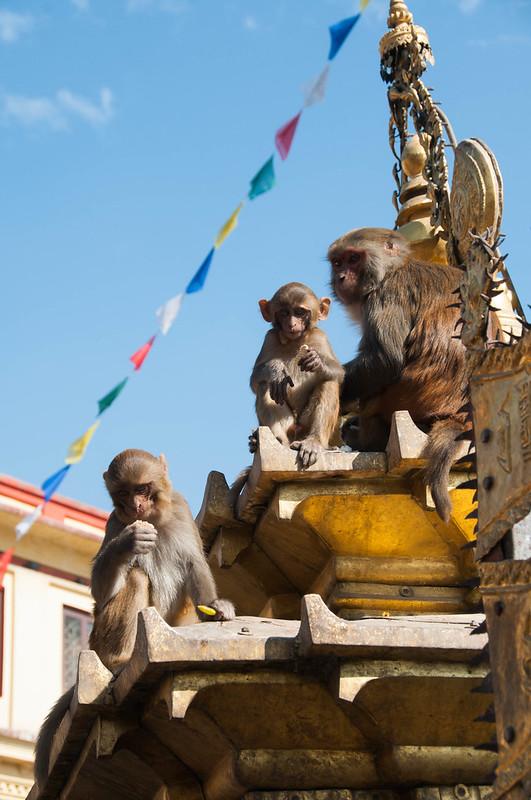 Monkeys at Svayambhu Stupa