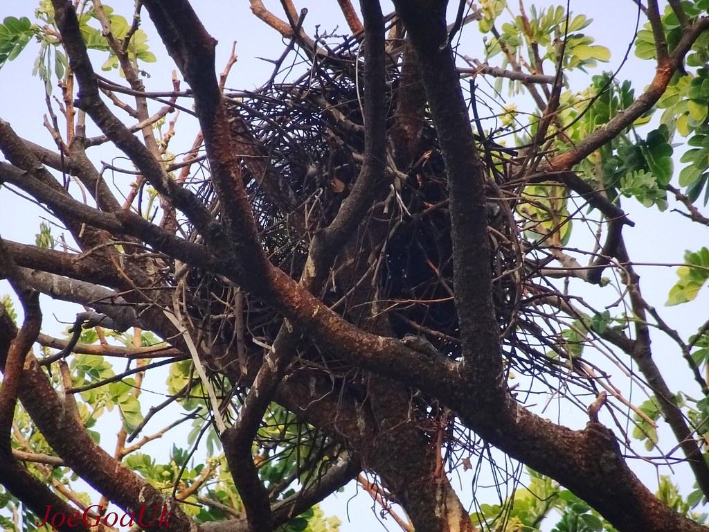 Crow nest