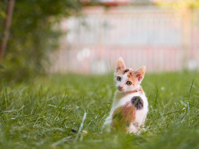 Colorful kitten playfully looking at the camera