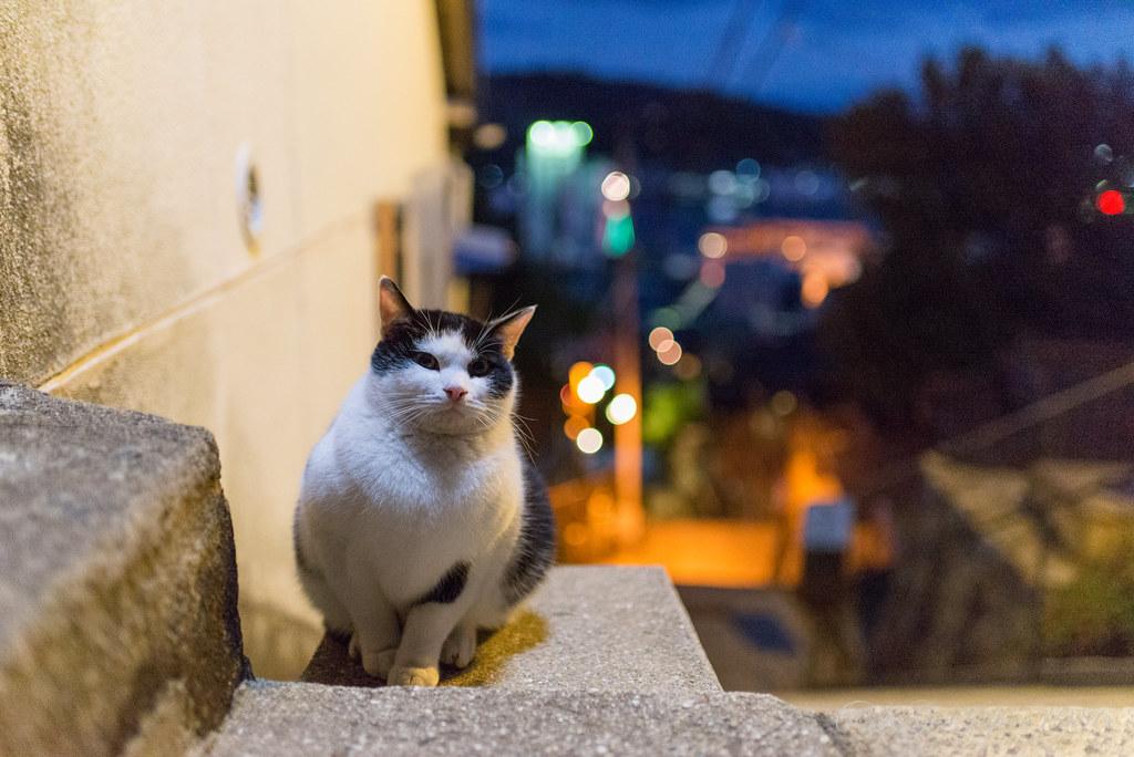 尾道 ネコ