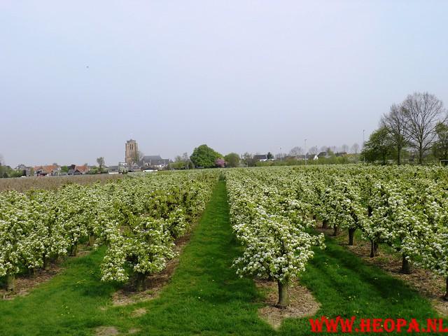 16-04-2011     Rode-Kruis   Bloesem   wandeltocht 26 Km (62)