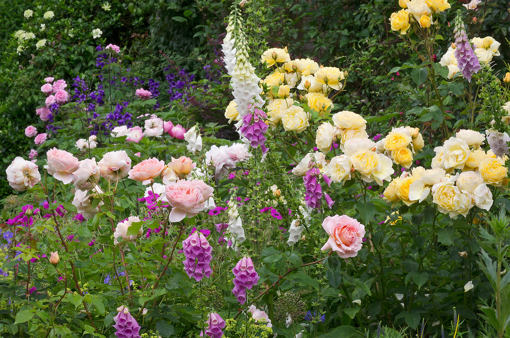 Cottage Garden Borders Bedfordshire Uk English Flower Flickr
