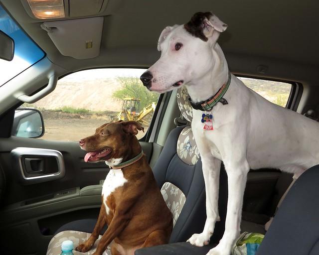 riding companions