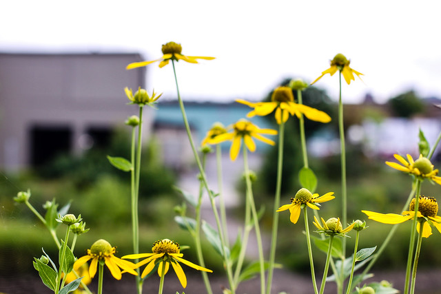 Fleurs sur fond de garage municipal