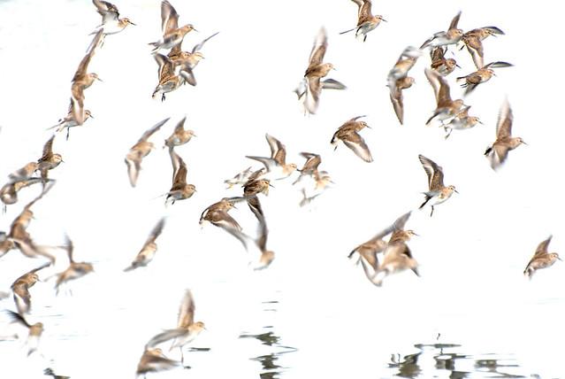 ......feels like posting birds again :)!
