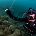 Diving the wrecks of Gibraltar