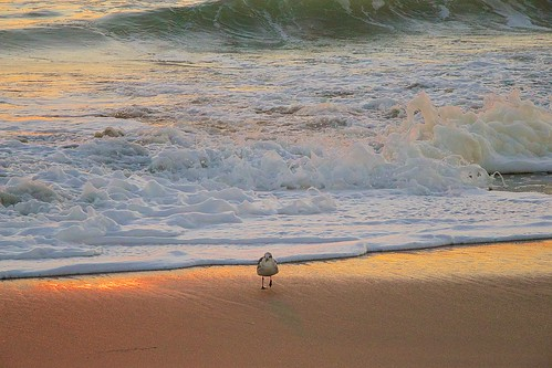 ocean beach sunrise dawn florida sandpiper indialantic