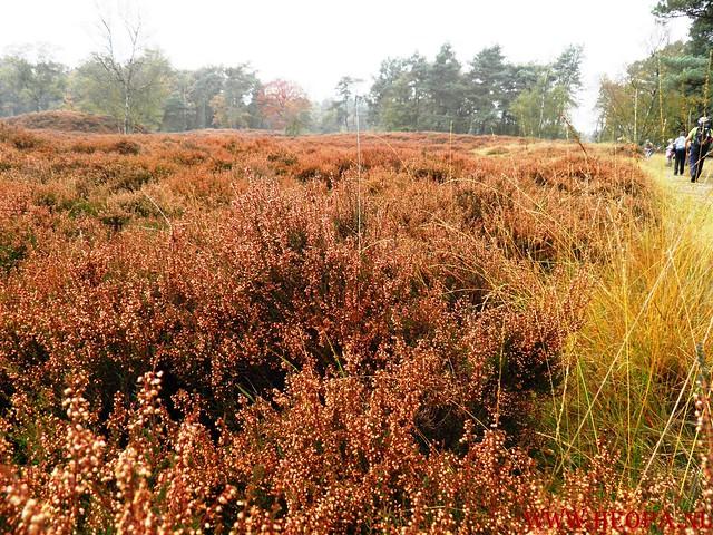 20-10-2012     Wedeblick-   Driebergen        25 Km (24)