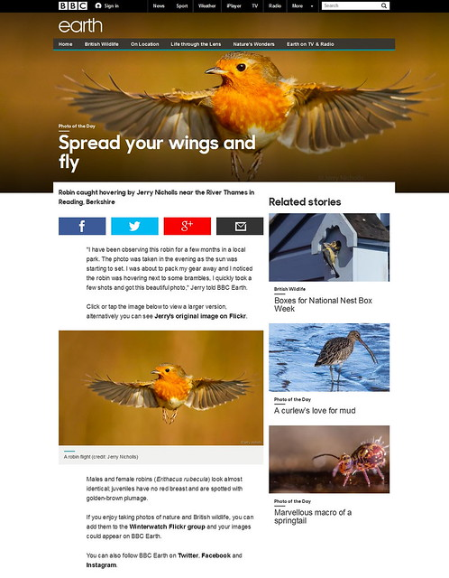 BBC - Earth - Spread your wings and fly -  a hovering robin