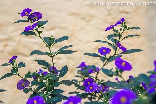 Simple Flowers | by refractingdymond