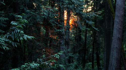 evening sunset whatcomfallspark bellingham washington bellinghamparks trees forest whatcomcounty
