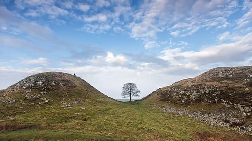 england tree beauty wall canon landscape natural gap sycamore northumbria lone naturalbeauty efs 1022mm hadrianswall lonetree hadrians efs1022mm sycamoregap 60d canon60d
