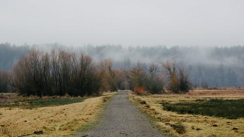 road fog trees nature landscape pacificnorthwest nisquallynationalwildliferefuge canoneos5dmarkiii canonef100400mmf4556lisusm overcast washington johnwestrock