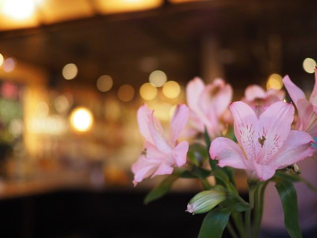 Orchidee Blume Orchid Cut Flower Restaurant Bar Café Solo (c)