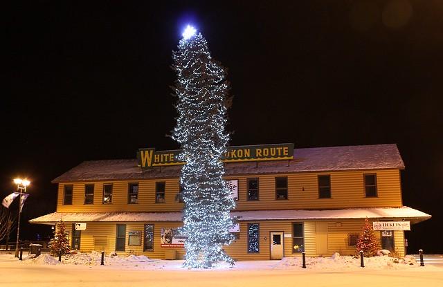 Whitehorse's town Christmas Tree 2014