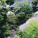 布引・釈尊寺の桜
