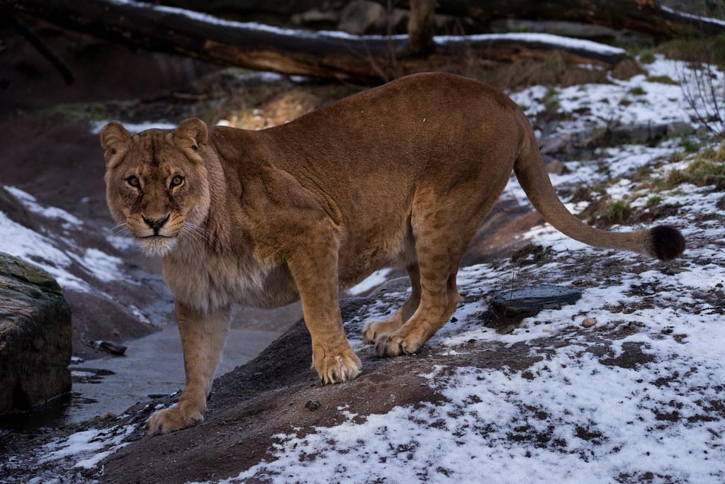 cougar i vest-agder fraskilte jenter fra helsingborg som søker sex dating