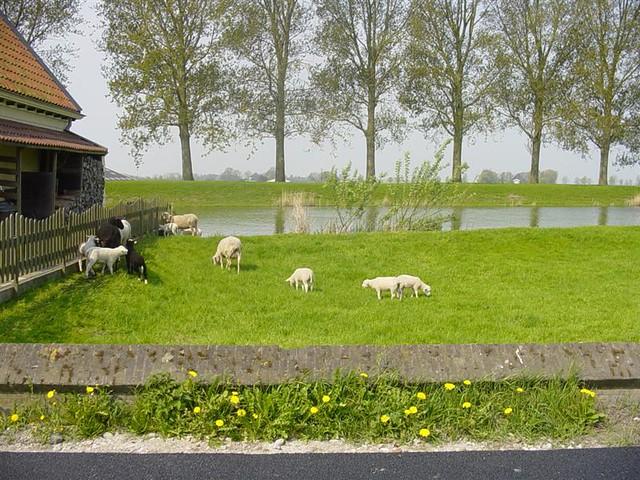 Hoorn          07-05-2006 30Km  (4)