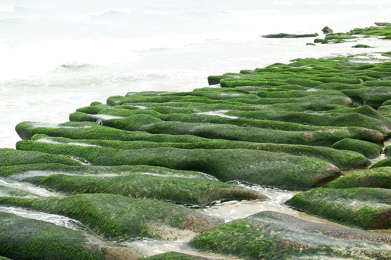 老梅 綠石槽