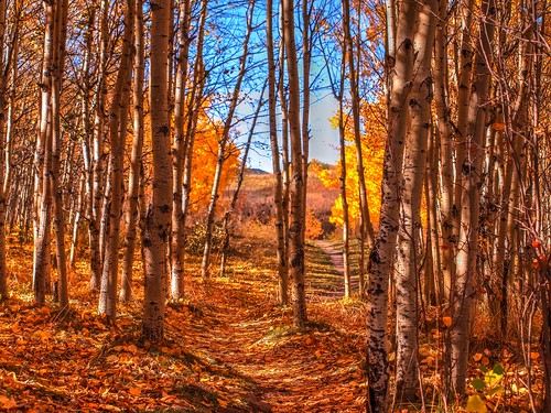 autumn canada calgary fall hiking path hike ridge alberta cougar
