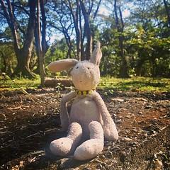 Into the woods? #FrankTheBunny sez 'Wazzup, folks?'