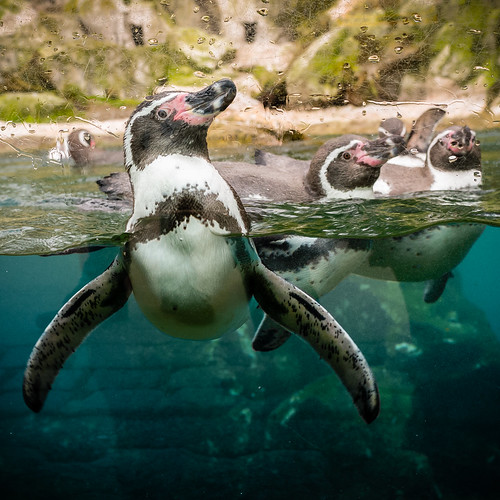 Penguin Fun? | by Martin Schachermayer