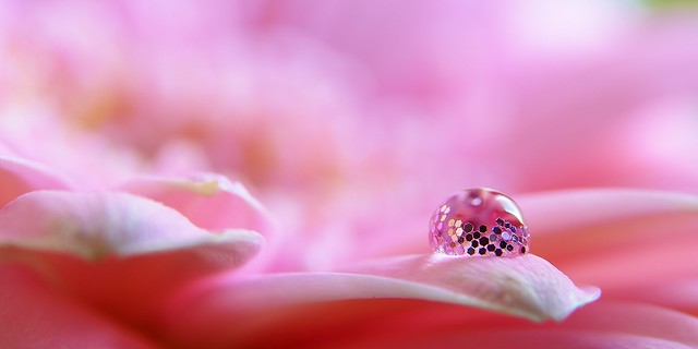 Macro water & glitter drop