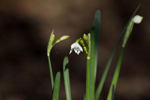 Spring sprung | by KevPBur