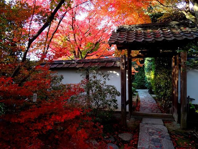 Kyoto Momiji 2014 Ichijoji 55