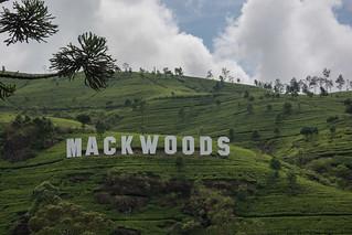 Sri Lanka. Nuwara Eliya. Mackwoods Factory.