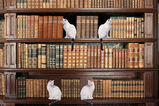 Bookend cats | by muffinn