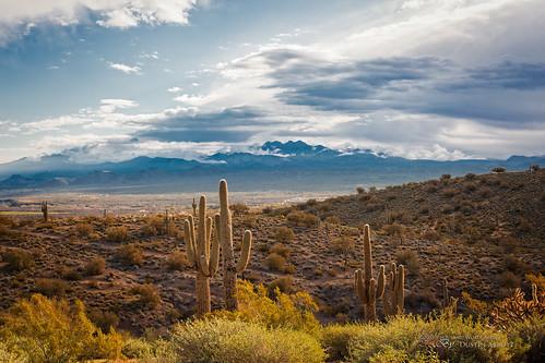 travel arizona cactus usa mountain beautiful clouds landscape unitedstates desert fullframe manualfocus shrouded shaftsoflight fourpeaks familytime fountainhills 2015 canoneos6d ononeperfectphotosuite thousandwordimages dustinabbott dustinabbottnet adobelightroom5 adobephotoshopcc alienskinexposure7 rokinon50mmf14asifumc