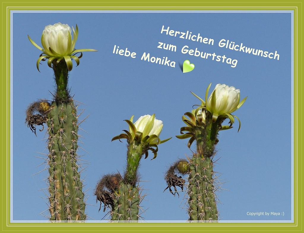 Geburtstagswünsche Karte Geburtstag.Geburtstagskarte Für Monika Pietschmann Birthday Card Fo Flickr