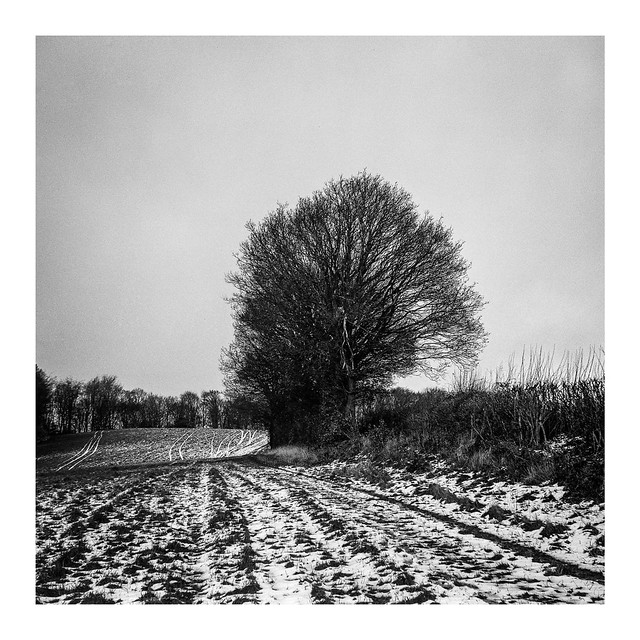 FILM - Winter field