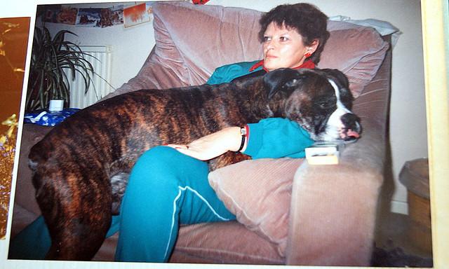World's largest Lap Dog