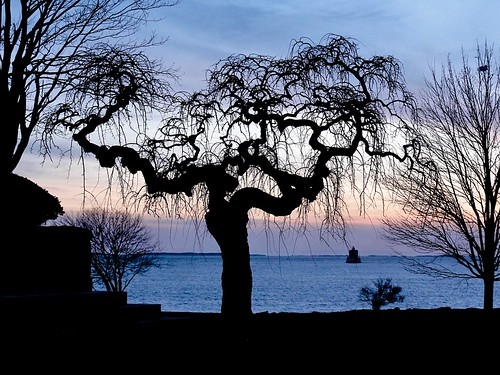 sunset lighthouse tree silhouette view shoreline twisted