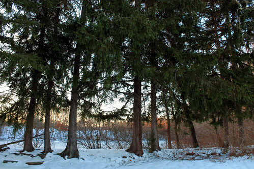 park trees winter sunset snow cold nature snowy rhodeisland icy johnstonwarmemorialpark