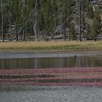 Mallard Lake