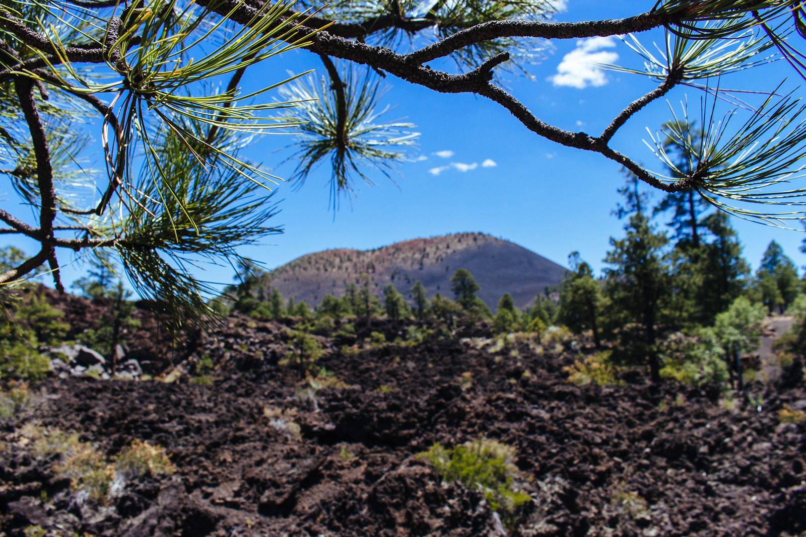 Cinder cone volcano seen through ponderosa pine branches