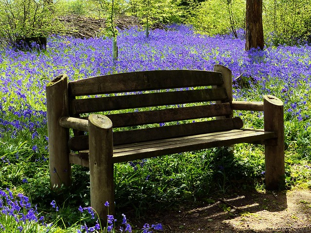 Seated in the bluebells
