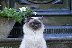 arrogante Katze